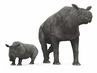 An adult Paraceratherium compared to a modern adult White Rhinoceros Fine-Art Print