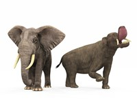 An adult Platybelodon compared to a modern adult African Elephant Fine-Art Print