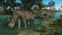 A pair of Platybelodon grazing in a shallow stream Fine-Art Print