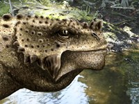 Close-up of the head of a Scutosaurus tuberculatus Fine-Art Print