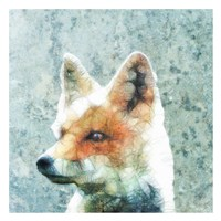 Abstract Fox Fine-Art Print