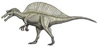 An Albino Spinosaurus Fine-Art Print