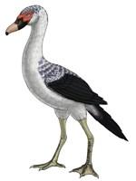 Presbyornis, an Extinct Genus of Anseriform bird Fine-Art Print