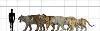 Big Felines Size Chart Fine-Art Print