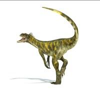 Herrerasaurus dinosaur on white background Fine-Art Print