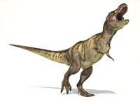 Tyrannosaurus Rex Dinosaur on White Background Fine-Art Print