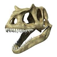 3D Rendering of an Allosaurus Skull Fine-Art Print