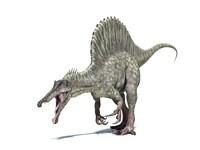 3D Rendering of a Spinosaurus Dinosaur Fine-Art Print