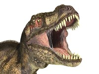 Close-up of Tyrannosaurus Rex dinosaur with Mouth Open Fine-Art Print
