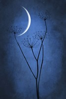 Blue Crescent Moon Fine-Art Print