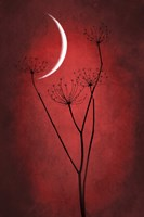 Red Crescent Moon Fine-Art Print
