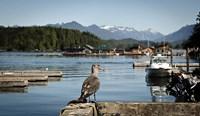 British Columbia, Vancouver Island, Strathcona Park, Harbor Fine-Art Print