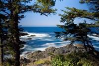 Wild Pacific Trail, Vancouver Island British Columbia Fine-Art Print
