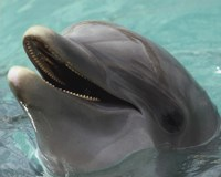 Dolphin - up close Fine-Art Print