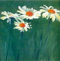 White Daisies Fine-Art Print