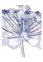 Violet Zen 1 Fine-Art Print