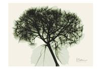 Verduous Hydrangea 1 Fine-Art Print