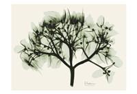 Verduous Hydrangea 2 Fine-Art Print
