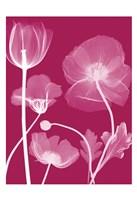 Transparent Flora 13 Fine-Art Print