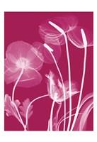 Transparent Flora 12 Fine-Art Print