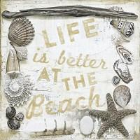 Sea Shell Collage II Fine-Art Print
