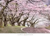 Blossom Hill Fine-Art Print