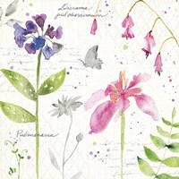 Soft Nature IV Fine-Art Print