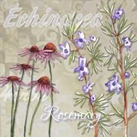 Herbs 2 Fine-Art Print