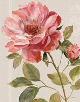 Harmonious Rose Linen Fine-Art Print
