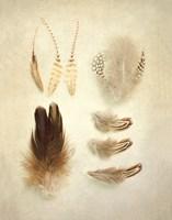 Feathers II Fine-Art Print