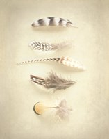 Feathers III Fine-Art Print