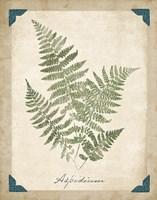 Vintage Ferns IX Fine-Art Print