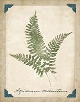 Vintage Ferns X Fine-Art Print