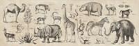 Wild Africa Fine-Art Print