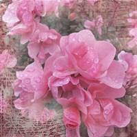 Fresh Rose I Fine-Art Print