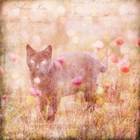Romantic Cat Fine-Art Print