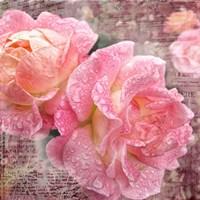 Fresh Rose III Fine-Art Print