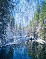 Winter trees along Merced River, Yosemite Valley, Yosemite National Park, California Fine-Art Print