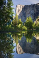 El Capitan reflected in Merced River Yosemite NP, CA Fine-Art Print