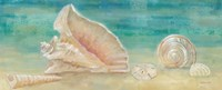 Horizon Shells Panel II Fine-Art Print