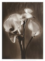 Calla Bouquet Fine-Art Print