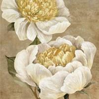 Up Close Cream Peony Fine-Art Print