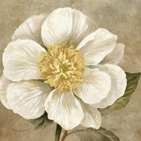 Up Close Cream Rose Fine-Art Print