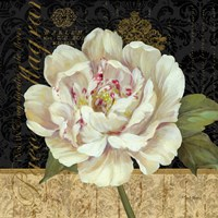 Antique Still Life Peony Fine-Art Print
