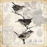 Botanical Birds Black Cream I Fine-Art Print