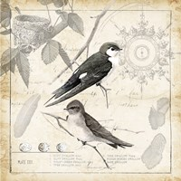 Botanical Birds Black Cream II Fine-Art Print
