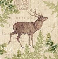 Woodland Trail I (Deer) Framed Print