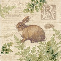 Woodland Trail IV (Rabbit) Fine-Art Print