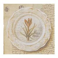Assiette, Crocus vermus Fine-Art Print