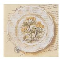 Assiette, Adonis Vernalis Fine-Art Print